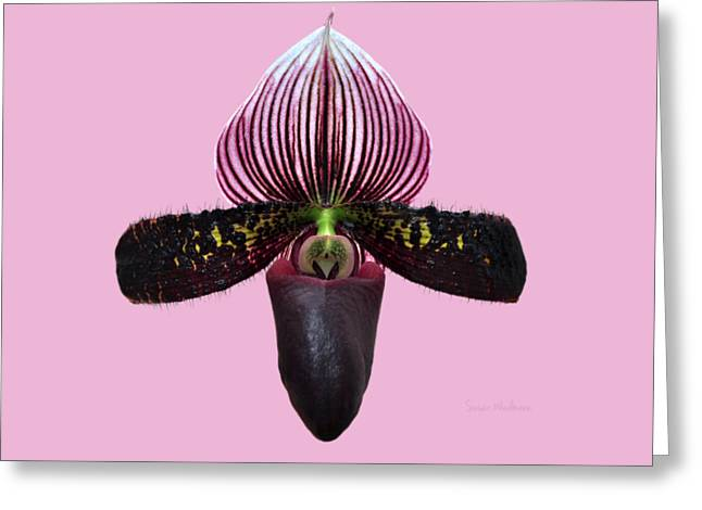 Orchid Paphiopedilum Satchel Paige X Black Beauty 2 Greeting Card