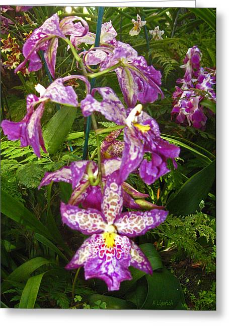 Orchids - Purple Polka Dots Greeting Card by Kerri Ligatich