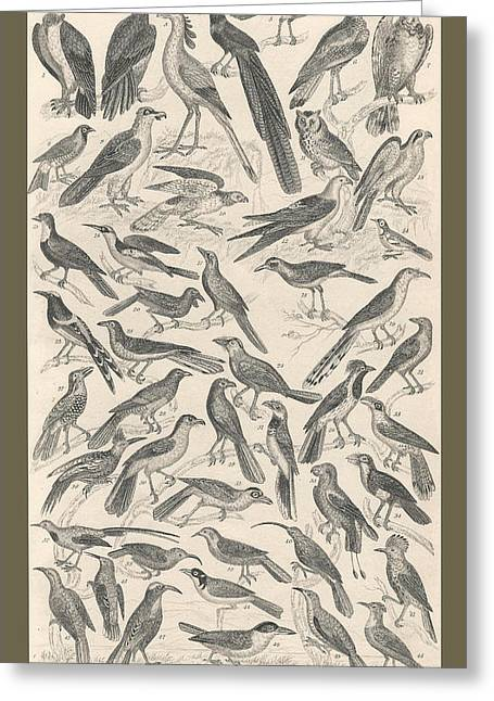 Ornithology Greeting Card