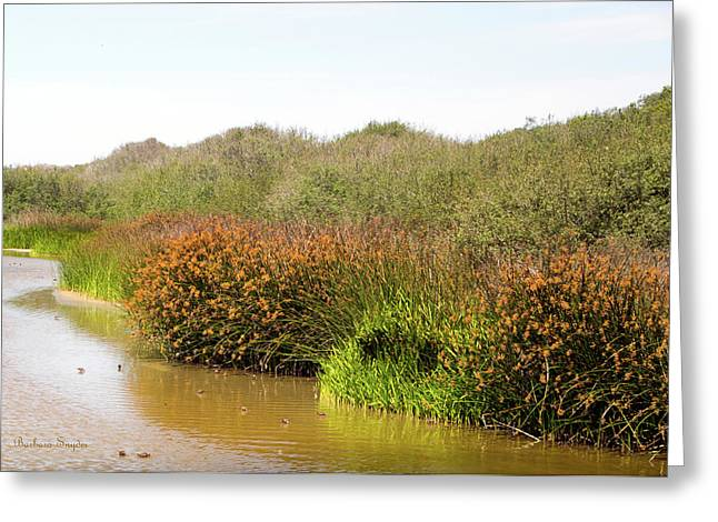 Oso Flaco Lake California State Park Greeting Card by Barbara Snyder