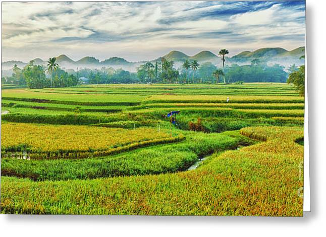 Paddy Rice Panorama Greeting Card by MotHaiBaPhoto Prints