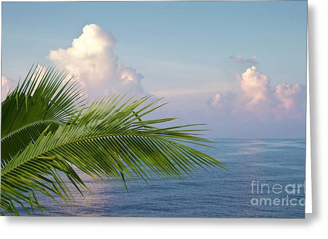 Palm And Ocean Greeting Card