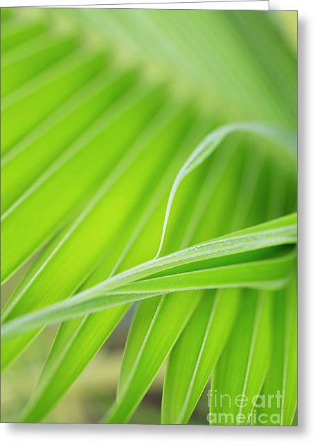 Palm Leaf Detail Greeting Card