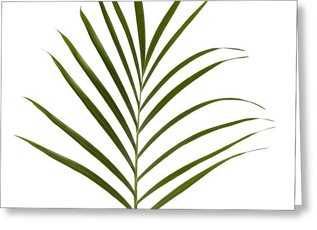 Palm Leaf Greeting Card by Tony Cordoza