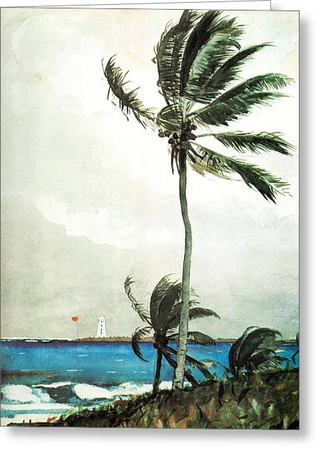 Schooner Greeting Cards - Palm Tree Nassau Greeting Card by Winslow Homer