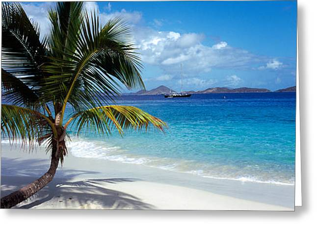 Palm Tree On The Beach, Salomon Beach Greeting Card by Panoramic Images