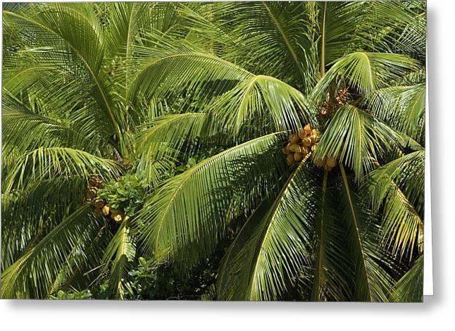 Palm Trees Greeting Card by Vanessa Devolder