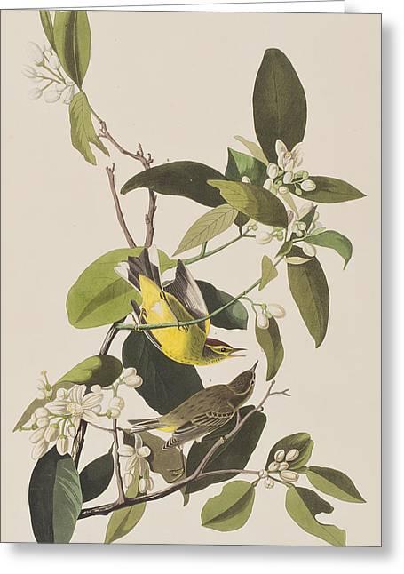 Palm Warbler Greeting Card by John James Audubon