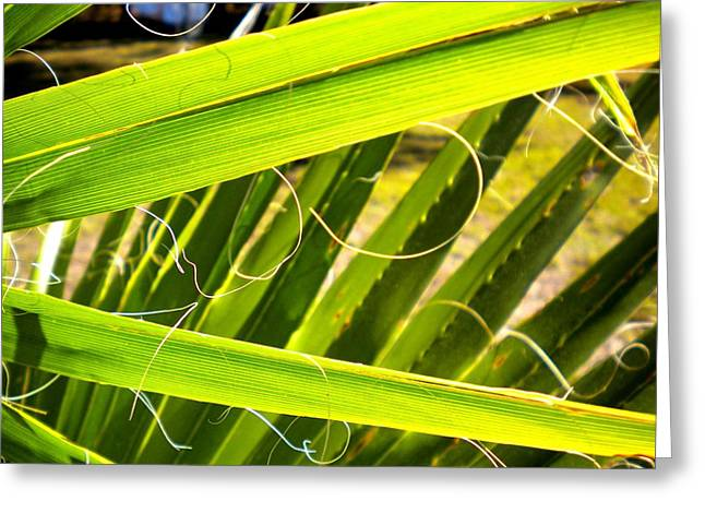 Greeting Card featuring the painting Palmetto 3 by Renate Nadi Wesley
