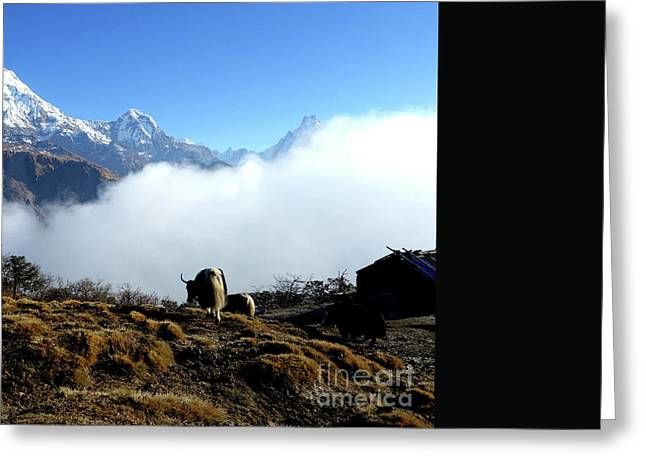 Panoramic View Of Everest Mountain Greeting Card