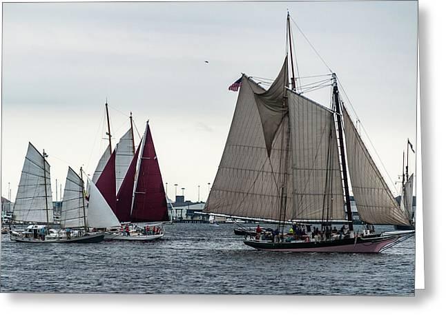 Parade Of Sail Greeting Card