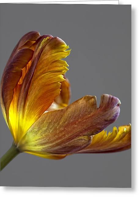 Parrot Tulip 21 Greeting Card by Robert Ullmann