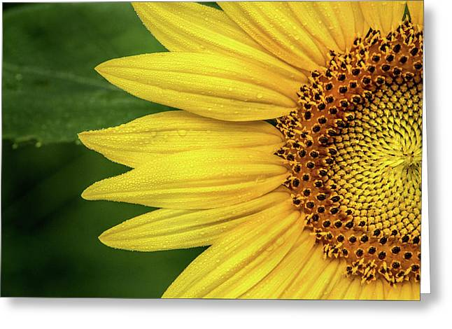 Partial Sunflower Greeting Card