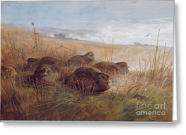 Partridges Greeting Card by Archibald Thorburn