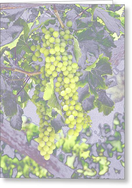 Pastel Grapes  Greeting Card by Mikehoward Photography