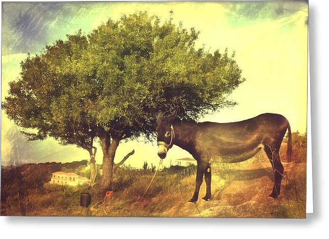 Pause For Thought Greeting Card by Tom Gowanlock