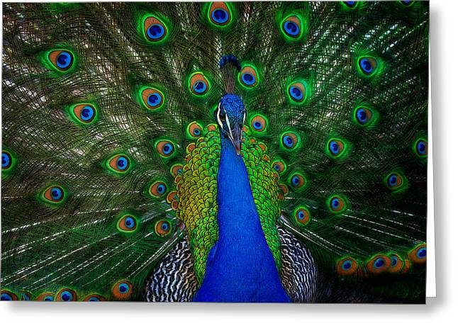 Greeting Card featuring the photograph Peacock by Harry Spitz