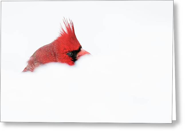 Greeting Card featuring the photograph Peekaboo by Mircea Costina Photography
