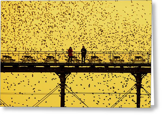 People On The Pier Sunset And Starlings In Aberystwyth Wales Greeting Card