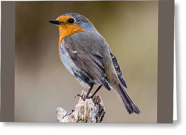 Perching Greeting Card
