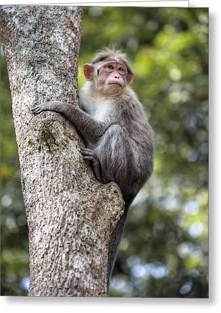 Periyar National Park - India Greeting Card