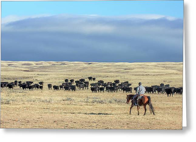 Driving The Herd Greeting Card by Todd Klassy