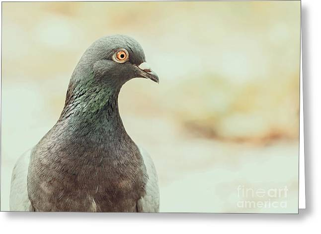 Pigeon Portrait Greeting Card by Radu Bercan