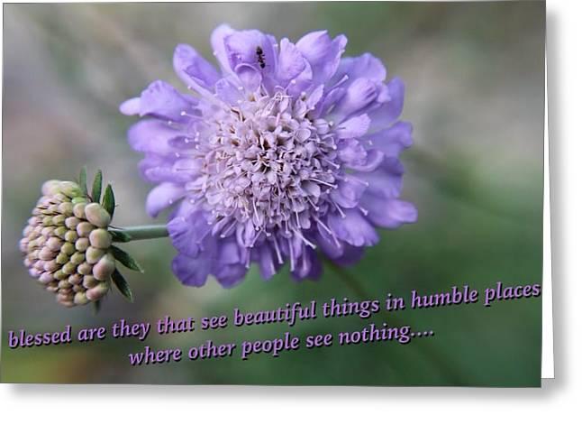 Pin Cushion Flower Greeting Card by Beth Tidd