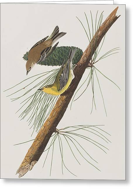 Pine Creeping Warbler Greeting Card by John James Audubon