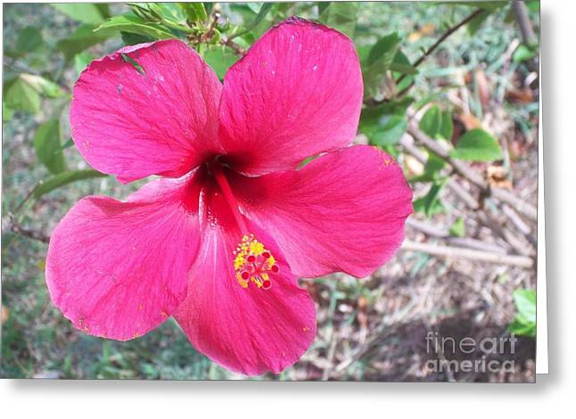 Pink Hibiscus Beauty Greeting Card