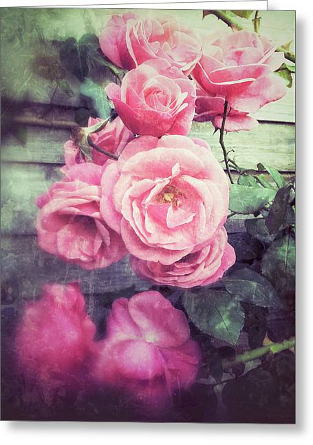 Pink Summer Roses Greeting Card