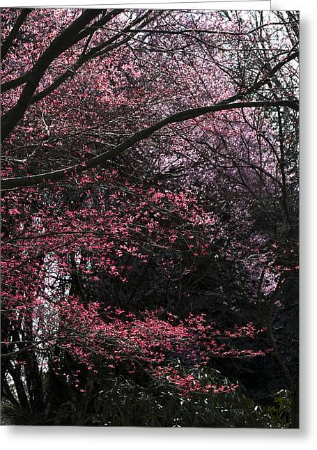 Pink Trees Greeting Card