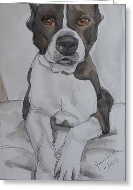 Pit Bull Greeting Card by Janet Butler