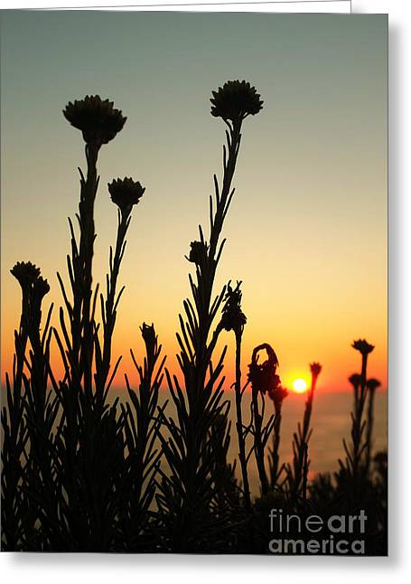 Plants On Sunset Greeting Card
