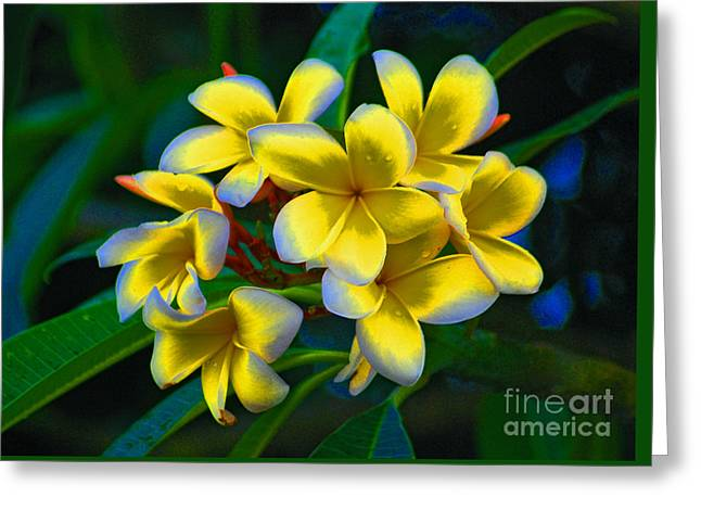 Greeting Card featuring the photograph 1- Plumeria Perfection by Joseph Keane