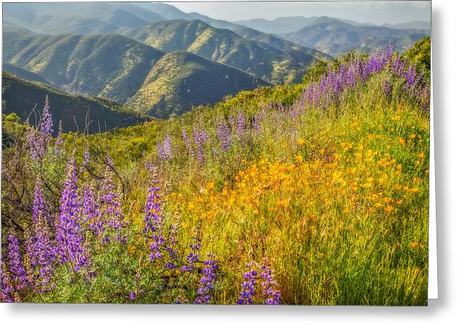 Poppies And Lupine Greeting Card