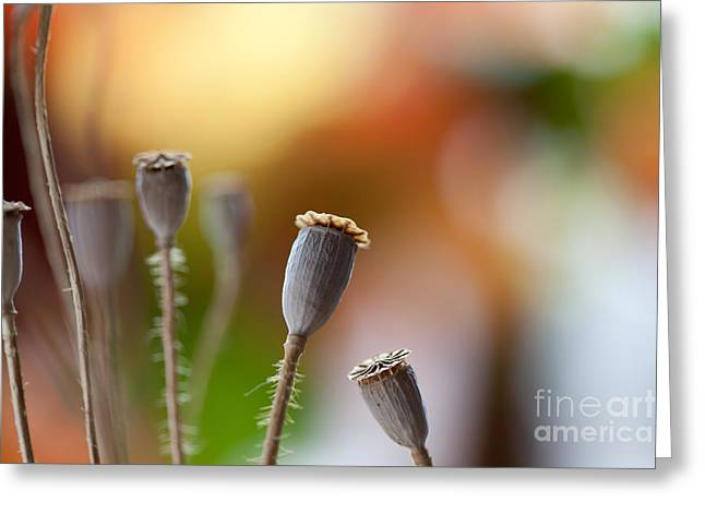 Poppy Pods Greeting Card by Nailia Schwarz