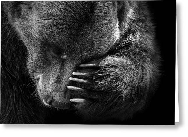 Portrait Of Bear In Black And White Greeting Card