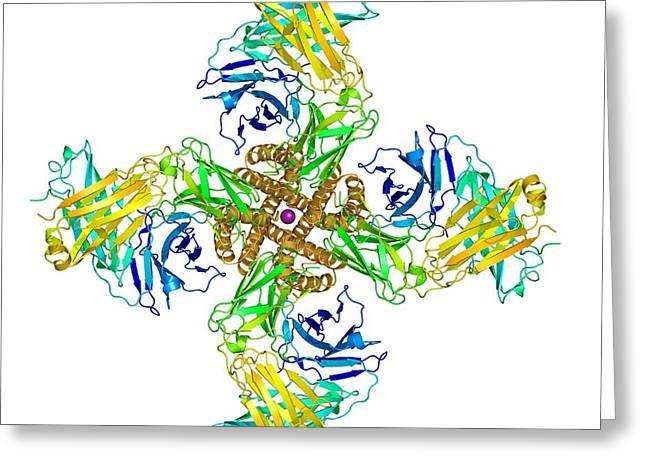 Potassium Channel Molecular Model Greeting Card by Laguna Design