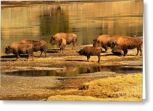 Greeting Card featuring the photograph Gathering To Cross The Yellowstone River by Adam Jewell