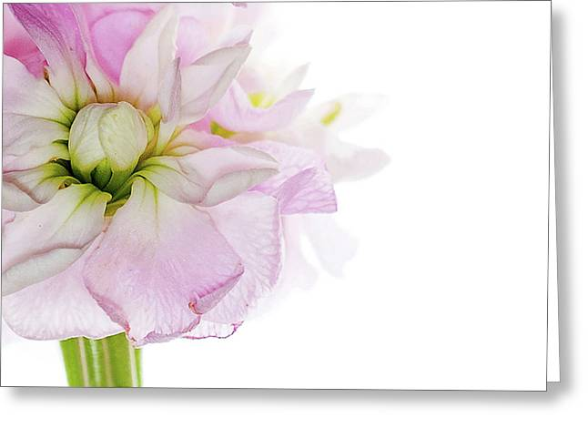 Pretty In Pink Greeting Card by Rebecca Cozart
