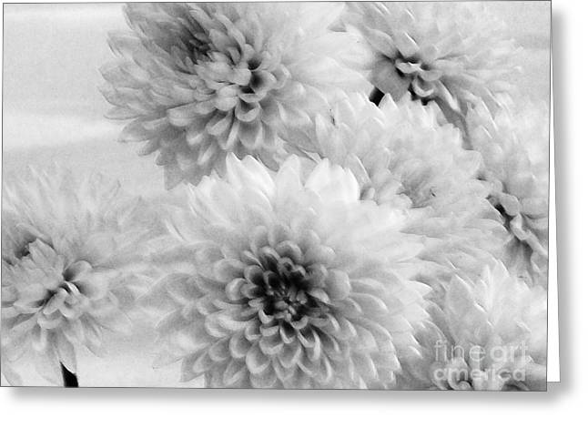 Pretty Petals Greeting Card by Marsha Heiken