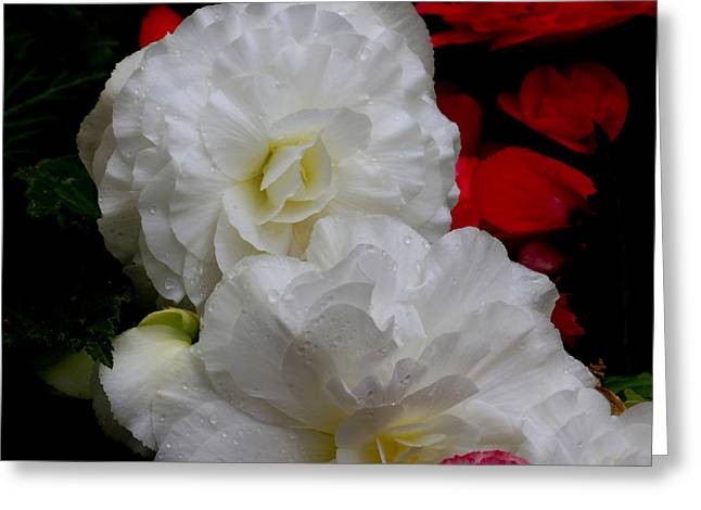 Greeting Card featuring the photograph Pretty White by Ivete Basso Photography
