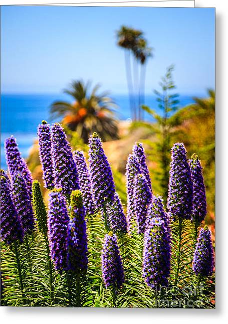 Pride Of Madeira Flowers In Orange County California Greeting Card