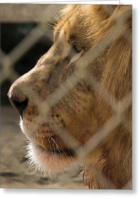 Profile Of A King Greeting Card by Travis Rogers