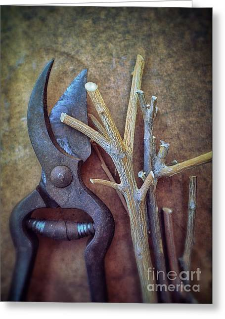 Pruning Scissors Greeting Card by Carlos Caetano