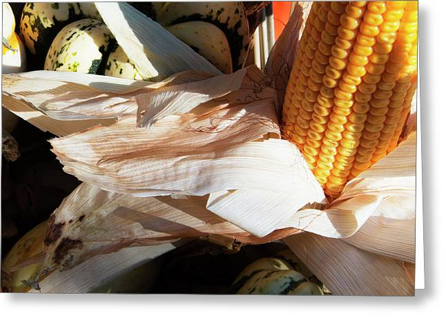 Pumpkin And Corn Greeting Card