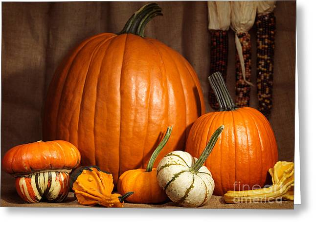 Pumpkins And Gourds Still Life Greeting Card by Oleksiy Maksymenko