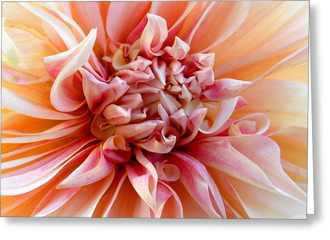 Pure Greeting Card by Christine Belt