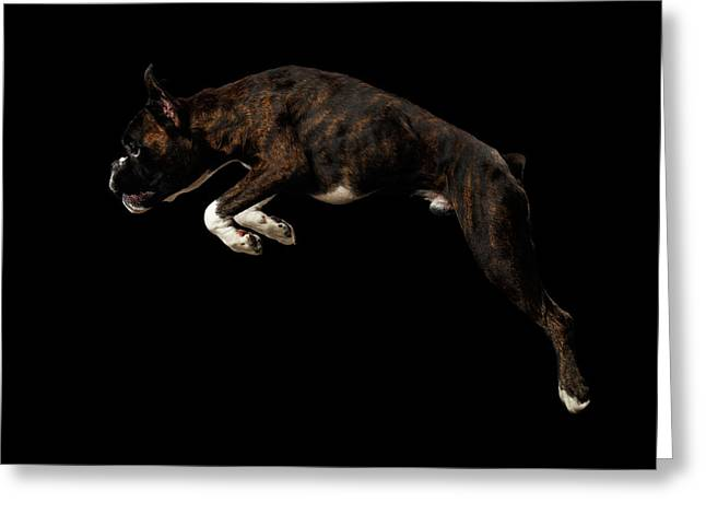 Purebred Boxer Dog Isolated On Black Background Greeting Card